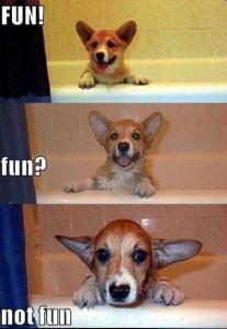 Cori bath - dog baths