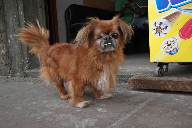 Cute ugly dog