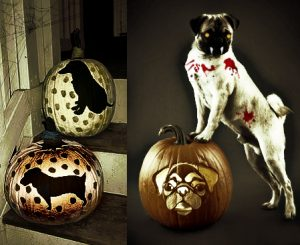 diy dog halloween pumpkin crafts
