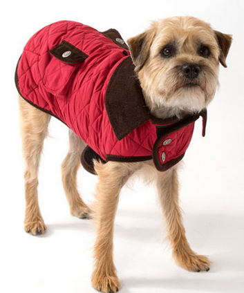 Dog in a red coat - fall fashion for dogs