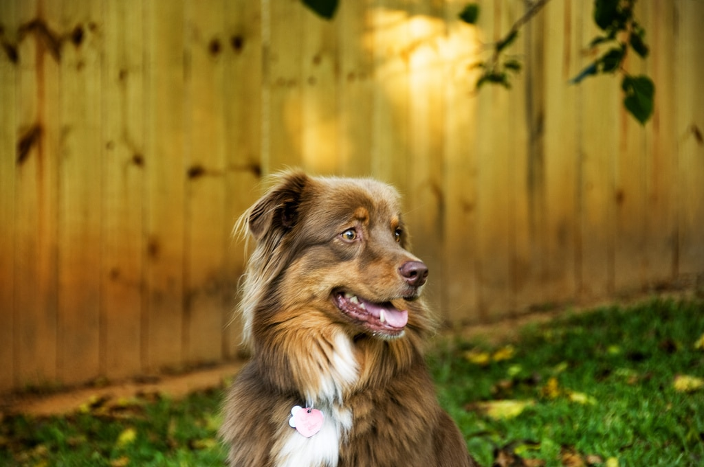 5 Dog Friendly Things To Do In Durham Nc Rover Com