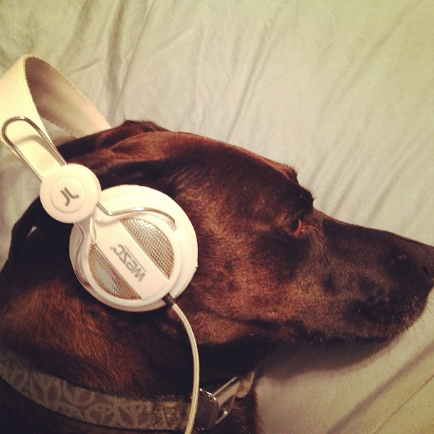 Dog in headphones - hipster dogs