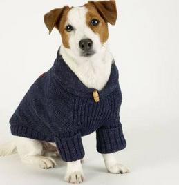 dog-in-vest