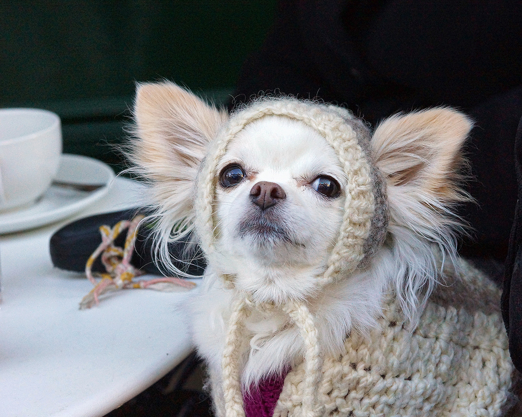 Dog in a knit hat - dog hipsters