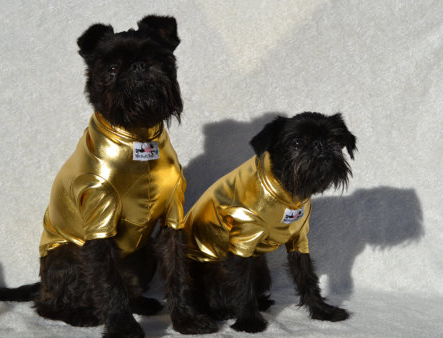 Two dogs in metallic outfits - fall fashion for dogs