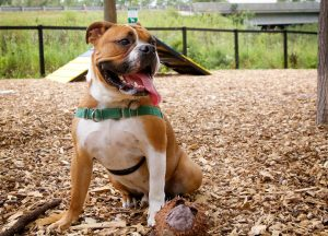 Dog at the dog park - best dog parks in San Antonio