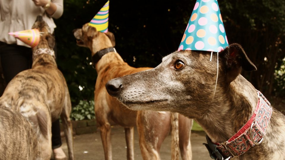 Dogs in party hats - fall dog events in Chicago