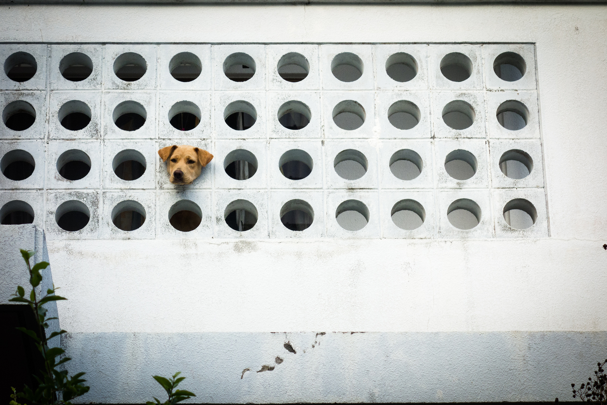 Dog stuck in a building/window