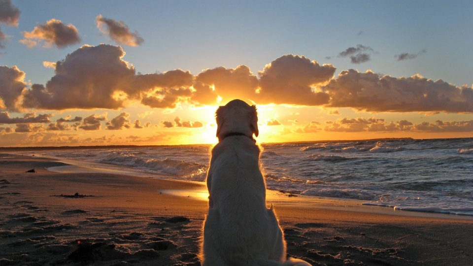 Dog in the sunset - grieving a pet