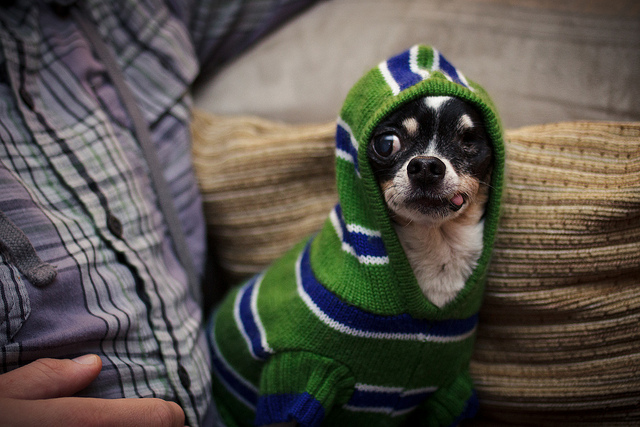 Dog in a sweater - hipster dogs