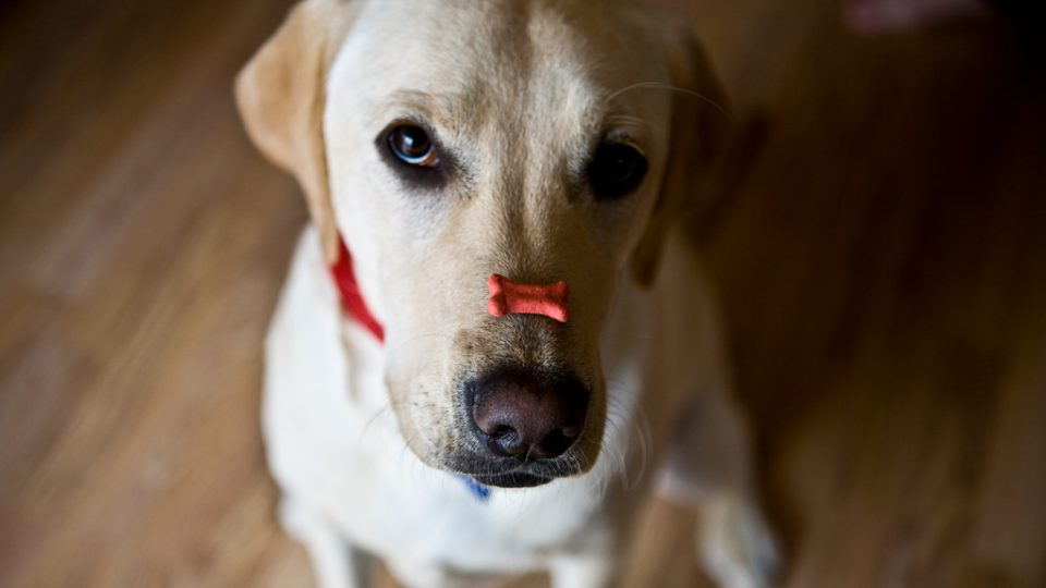 Dog with a treat on his nose