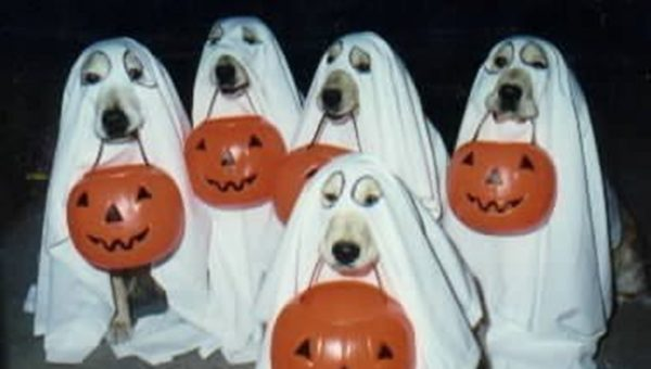 The Best Dog Treats and Tricks for Halloween