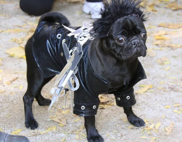Edward Scissorhands dog