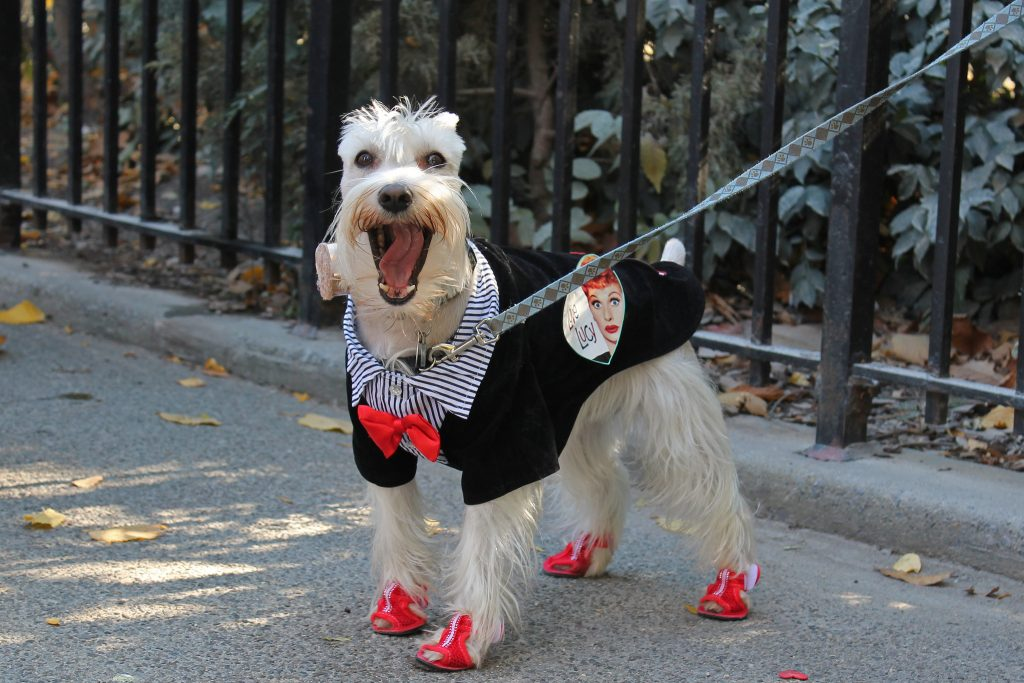Dog in a fancy costume - Los Angeles dog events