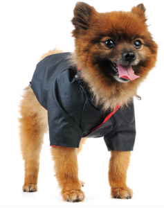 Dog in clothes - fall fashion for dogs