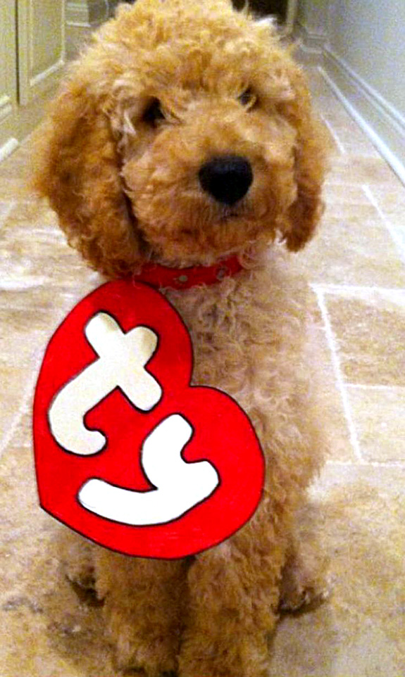 goldendoodle beanie baby