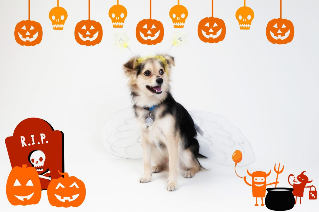 Halloween party dog - #FrankenPet contest