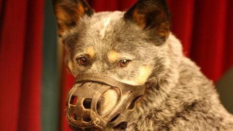 Dog Hannibal Lecter
