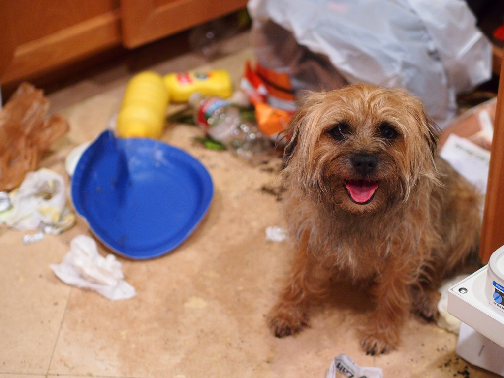 Messy dog in a kitchen
