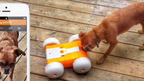 Pawly dog