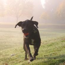 Portland dog runs in the grass