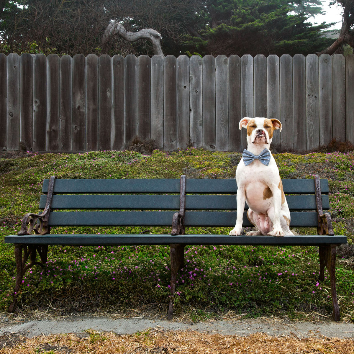 Puka on a bench