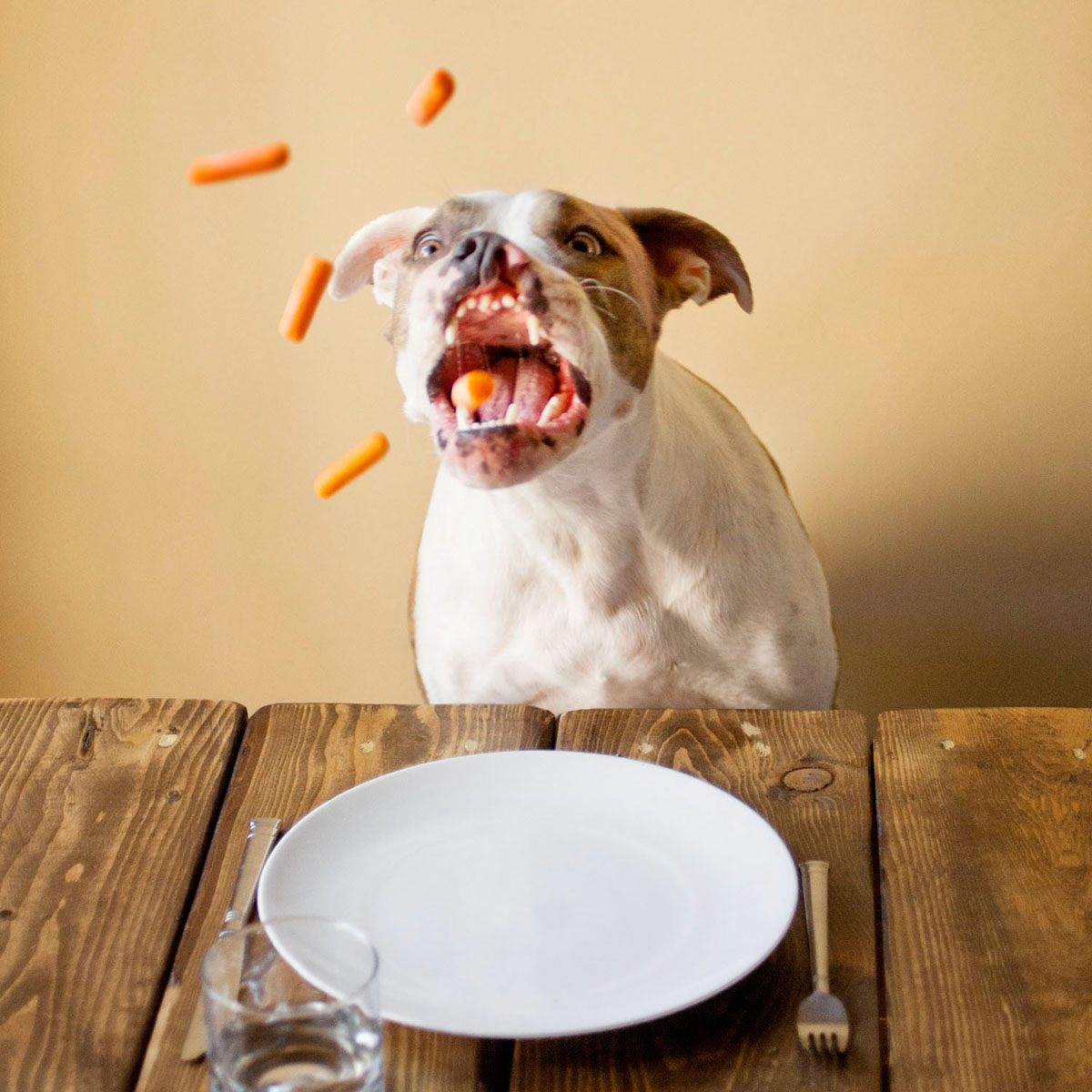 Puka the dog catches carrots