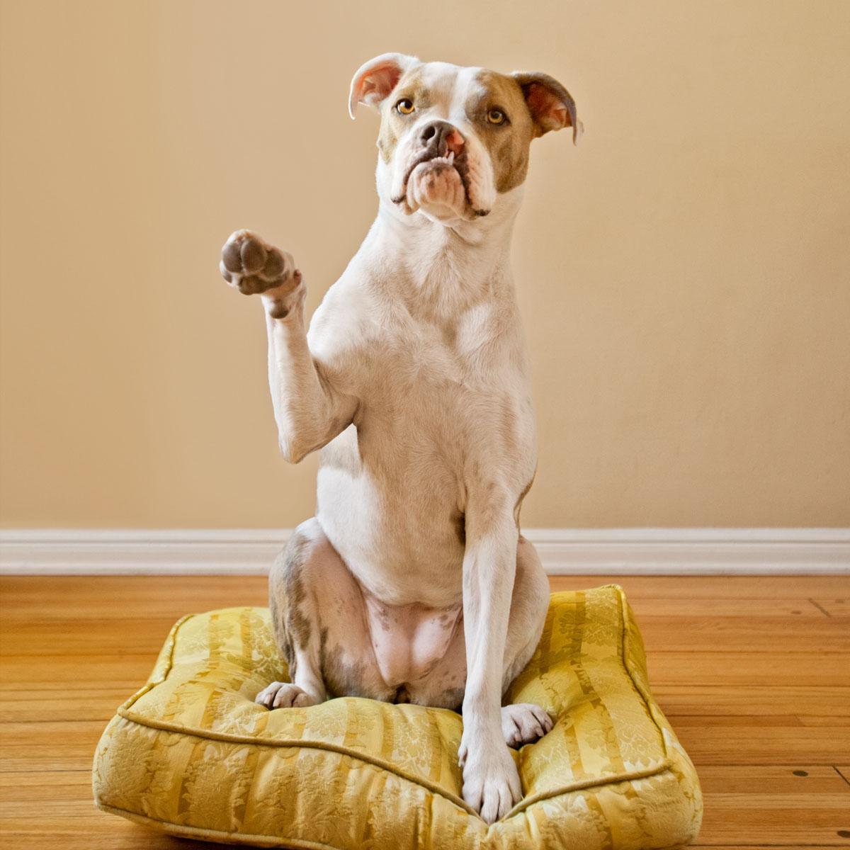 Puka the dog raises her paw