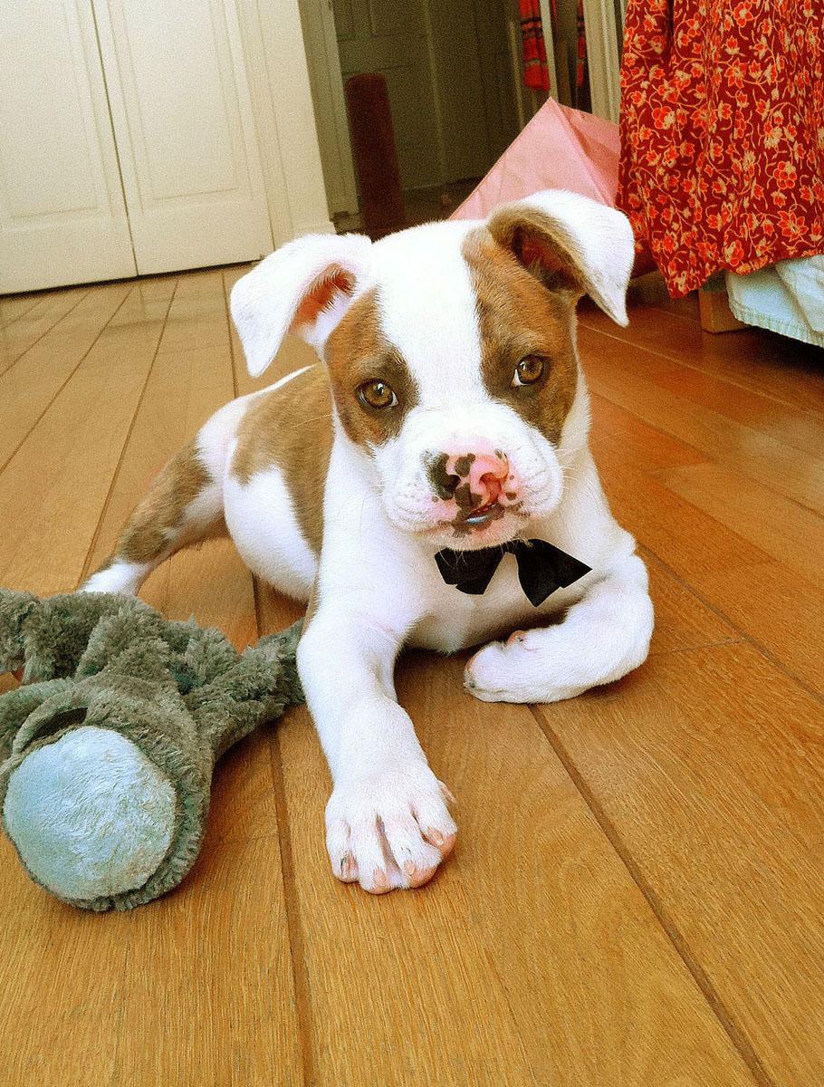 Puka as a puppy