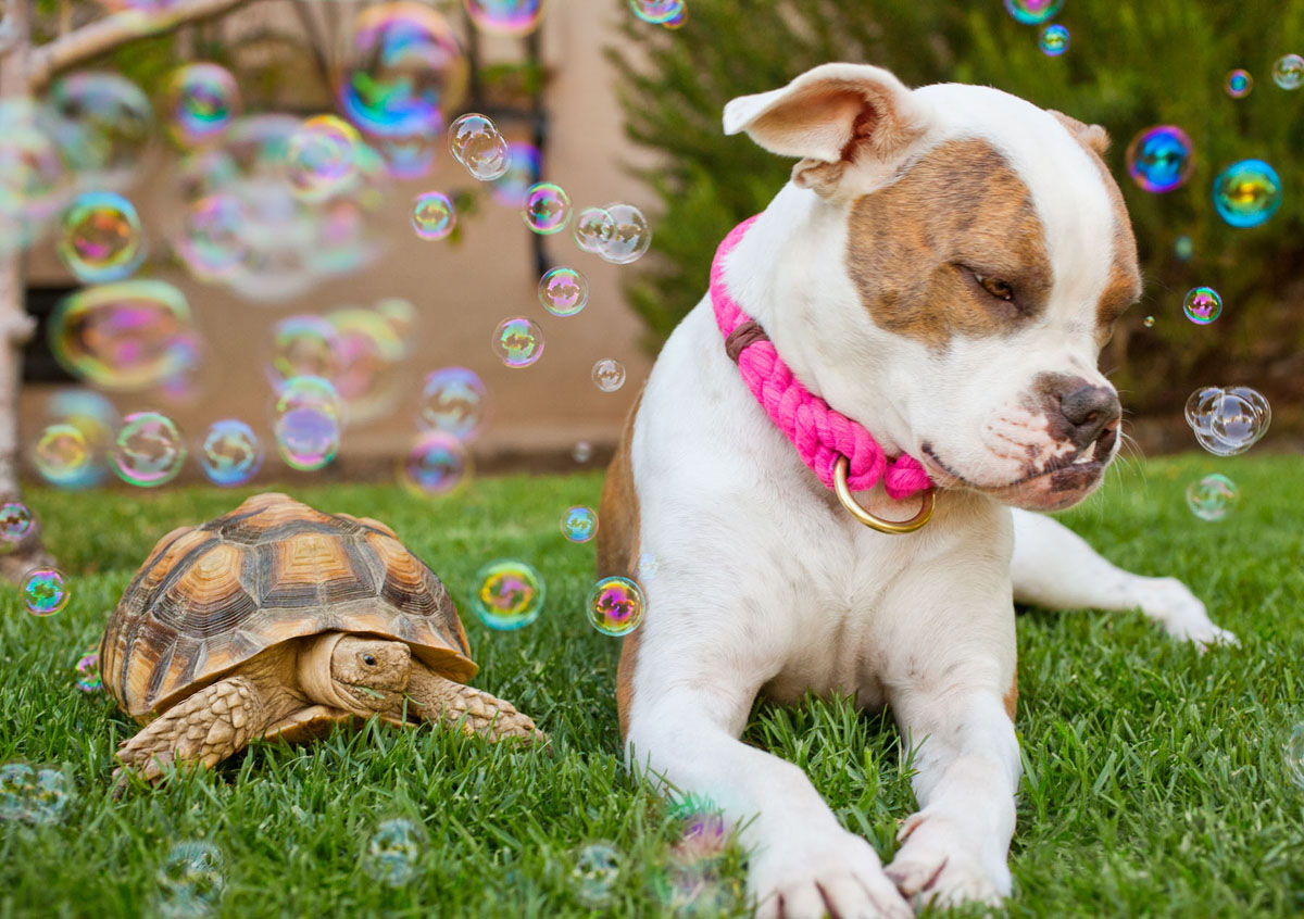 Puka in the bubbles with a turtle