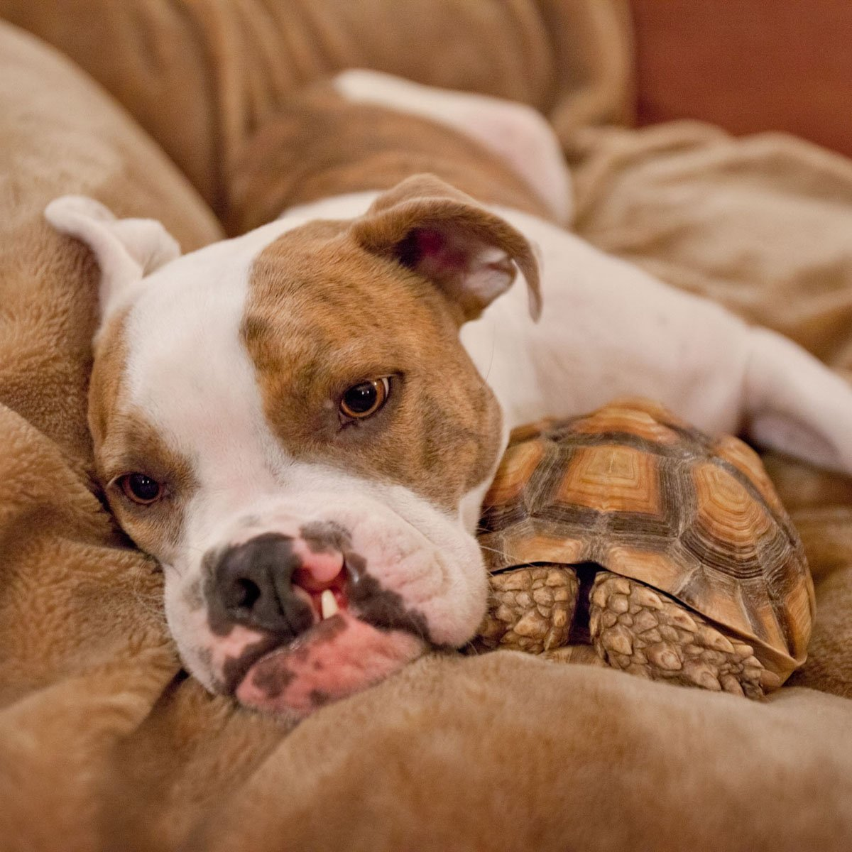 Puka the dog cuddles with a turtle