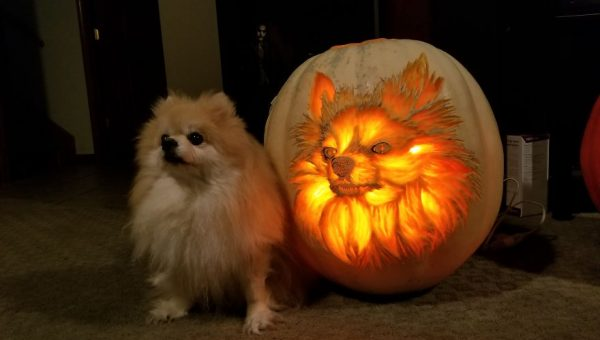7 Halloween Safety Tips for Dogs
