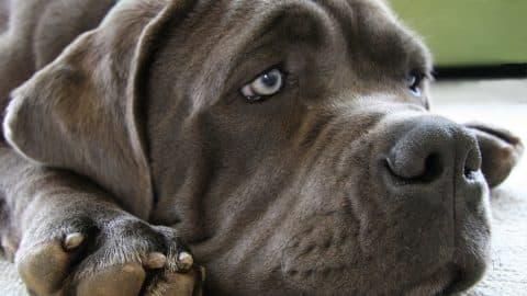 Sad dog - common dog fears