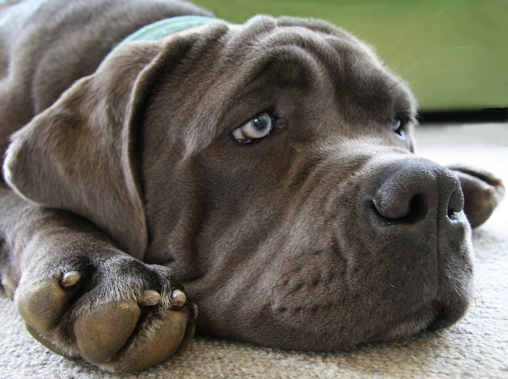 Common Dog Fears You Need to Know About