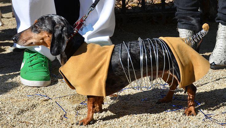 slinky dog dachshund costume