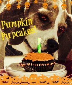 spooky pumpkin pupcakes