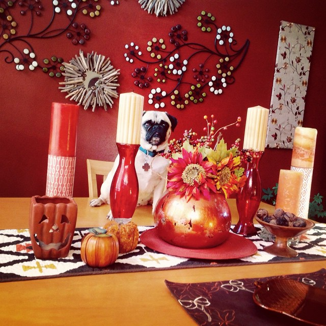 Pug with his tablescape