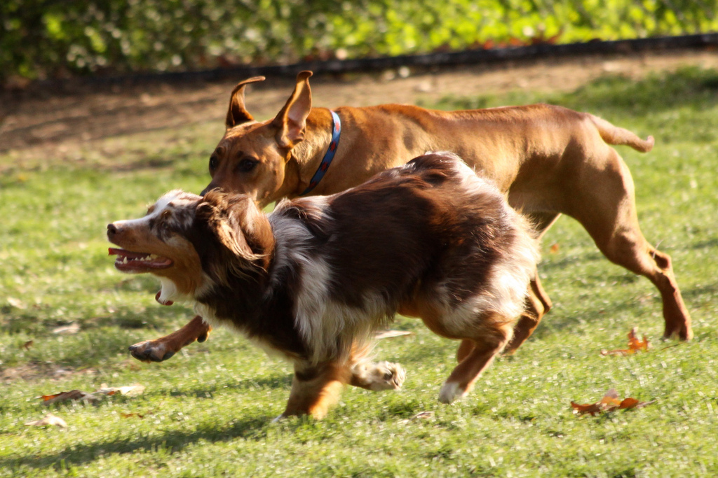 The 6 best san antonio dog parks for Cool dog spa san antonio