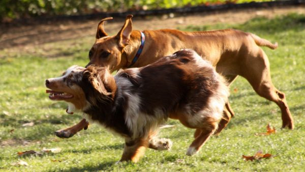 The 6 Best San Antonio Dog Parks