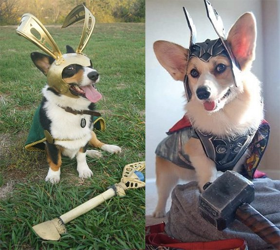 thorgi and logi Marvel Superhero dog costume