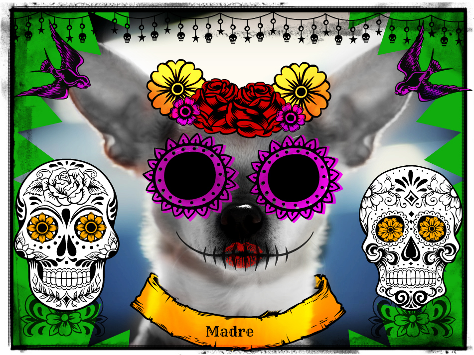 Day of the Dead dog - #FrankenPet contest