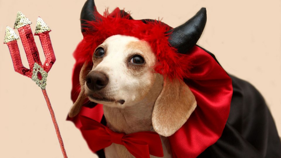 Dog in vampire costume - Halloween pet safety