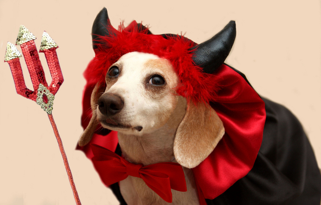 7 Halloween Safety Tips For Dogs The Dog People By Rover Com