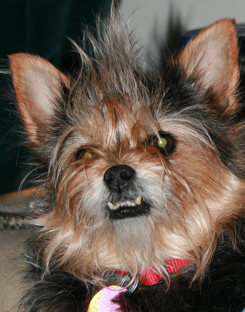 Wolfy dog - ugly dogs, scary dogs