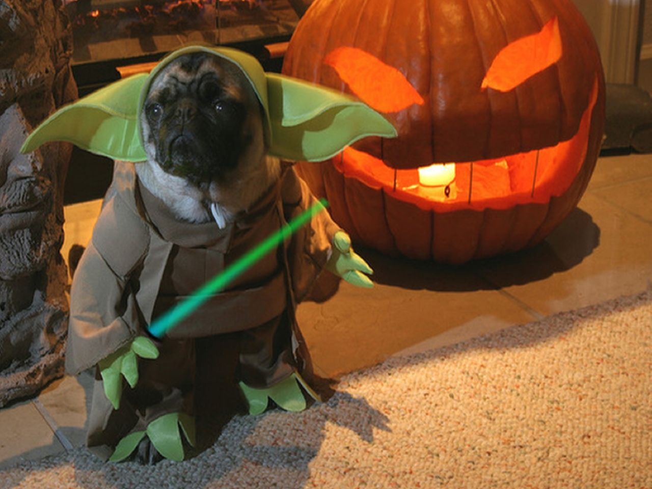 yoda pug costume