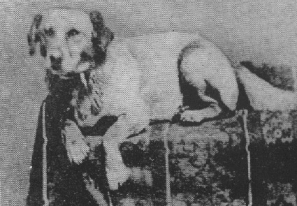 Presidential pet Fido, Abraham Lincoln's dog