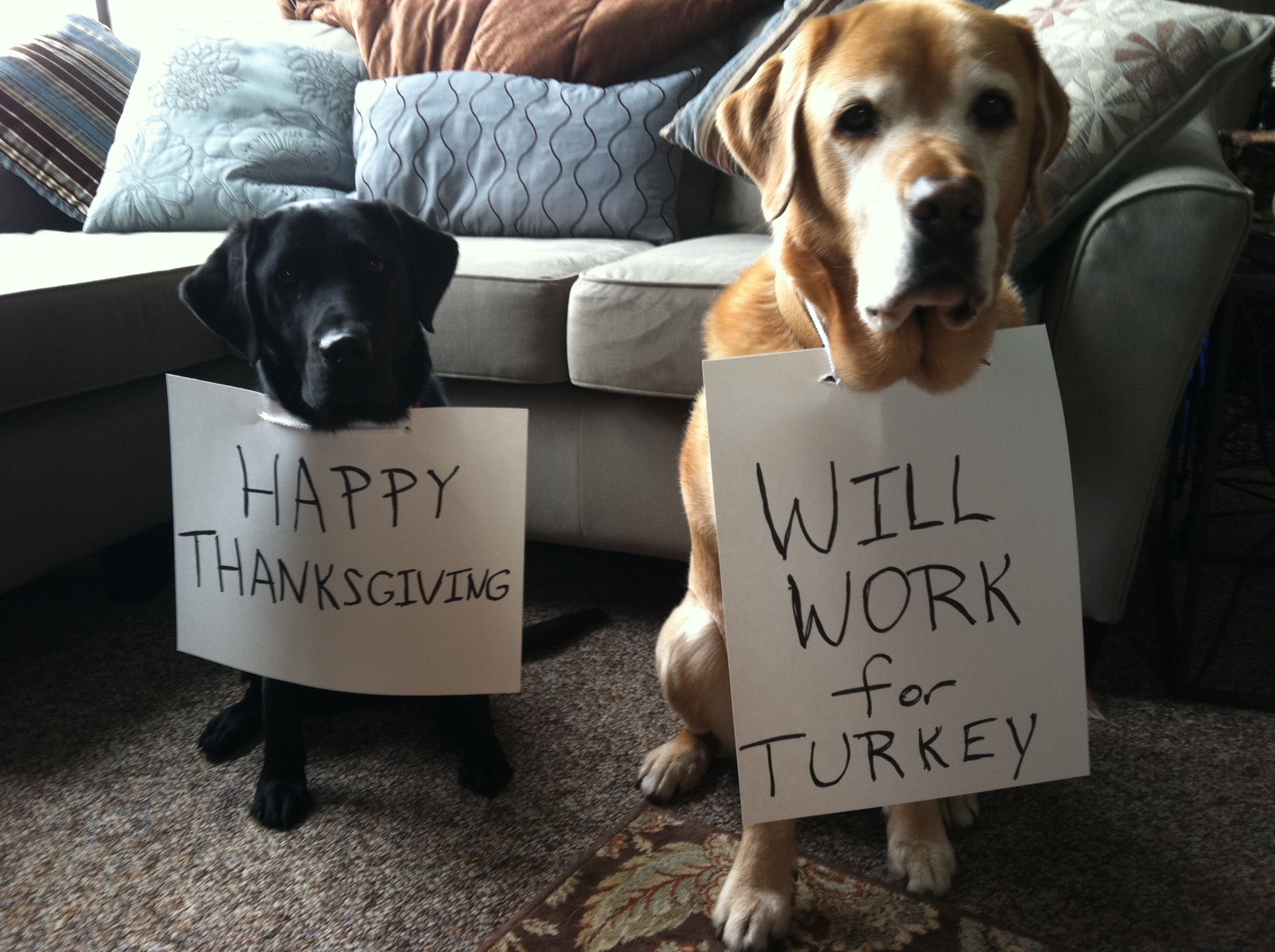 Thanksgiving Foods Your Dog Can Eat