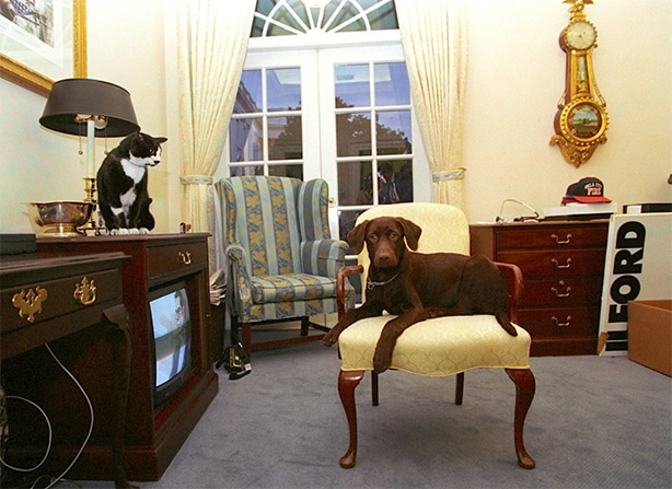 Socks the cat and Buddy the dog in the White House