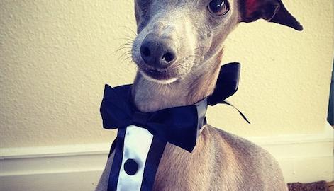 Bob the dog, fall fashion icon