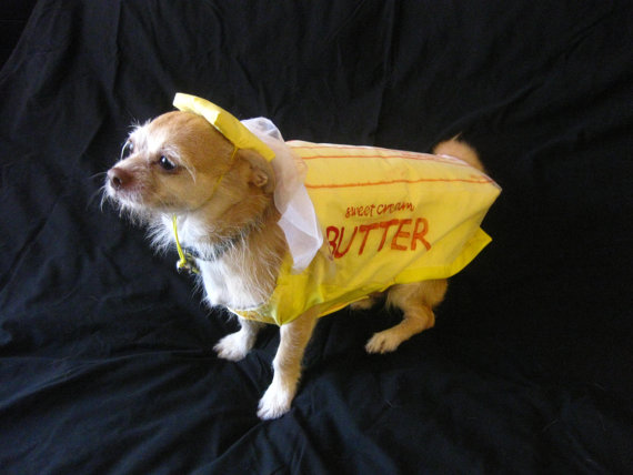 butter dog costume